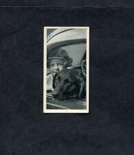 Carreras - 1936 - Dogs & Friends - No 49 - Labrador Retriever