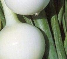 Vegetal Cebolla Kosma - Aprox 120 Semillas Otoño/Primavera