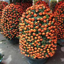 40 pcs Orange Tree Seeds Delicious Sweet Edible Balcony Potted Fruit tree