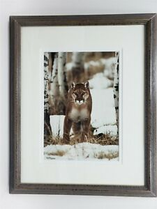 Richard Jackson Color Photograph Cougar North Fork Limited Ed. 459/500 Signed
