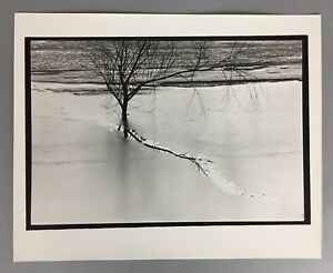 Modern Abstract Black and White Fine Art Photo Stamped JOSEPH BUEMI 8x10 Tree