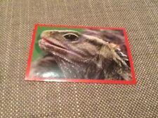 #176 Panini Dinosaurs Like Me sticker / unused