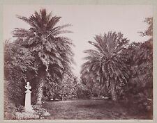 PHOTO SOMMER - ITALIE - PALERMO - Giardino Garibaldi - palmier