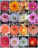 ECHINOPSIS variety mix exotic hybrid flowering cacti cactus shick seed 100 SEEDS