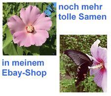 der Schmetterlingsmagnet: ein Duft- und Farbenwunder ist die schöne ROSENMALVE