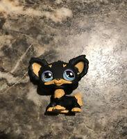 Littlest Pet Shop Authentic # 1571 Black Caramel Tan Chihuahua Blue Eyes Hasbro