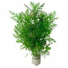 Hygrophila Difformis Water Wisteria Live Aquarium Plants Bunch Buy2get1free*