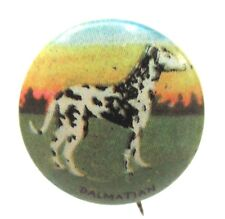 1930's DALMATIAN Dog tin litho pinback button