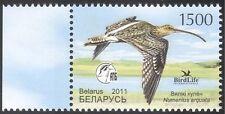 Belarus 2011 Curlew/Birds/Nature/Wildlife/Conservation/Environment 1v (n32350)
