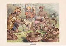 Brillenschlange Naja naja Kobra Chromo-Lithographie von 1913 Schlangen