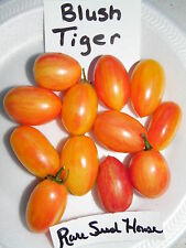 Blush Tiger Tomato Seeds! This tomato is beautiful! Comb. S/H See our store!