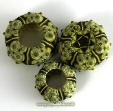 Sea Urchin Natural Stone 2-3 Cm. for Crafts and Other Creative Uses