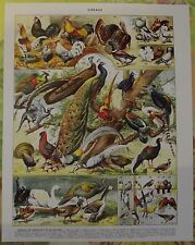 Ancienne Gravure Larousse 1950 Art Print on Original Antique Book Page 1950 Paon