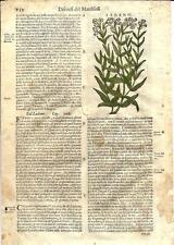 Stampa antica ERBARIO MATTIOLI MATTHIOLI FIORI Laudano 1580 Old antique print