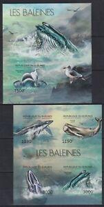F459. Burundi - MNH - Marine Life - Whales - 2012 - Imperf