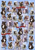 Bulldog Christmas Wrapping Paper By Starprint - Auto combined postage