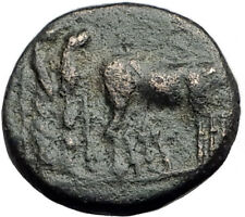 AUGUSTUS 27BC Philippi Macedonia PRIESTS Founding City Oxen Roman Coin i64936