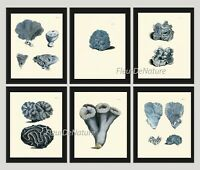 Unframed Blue Cora Print Set of 6 Antique Sea Ocean Cottage Beach Home Wall Art