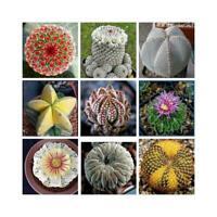 Mixed 200 Pc Bag Real mini cactus seeds rare succulent perennial herb Plant Hot