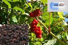 DR T&T ™ Schizandra Berries Wu Wei Zi dried berry 500g dry herb UK SELLER