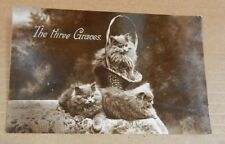 """Postcard Animals Persian Kittens """"the Three Graces"""" RPPC posted1934 xc4"""