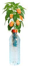 PETomato™ Hydroponic Habanero Pepper Plant Growing Kit ASI9807 by Kagan