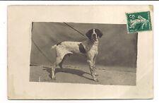 photo carte postale  chien (1016e)