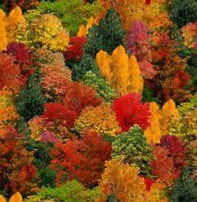 Landscape Medley Fabric - Autumn Fall Forest Tree Scene - Elizabeth Studio YARD