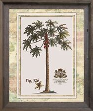 Tropical Palm Tree Vintage Fig 526 Contemporary Wall Decor Art Framed Picture
