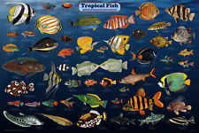 Tropical Fish Laminated Aquarium Educational Science Class Chart Poster 24x36