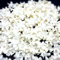50 White Color Flowers mulberry paper for Craft & D.I.Y