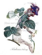 "SALVADOR DALI Botanical Art Poster or Canvas Print ""Framboisier"""