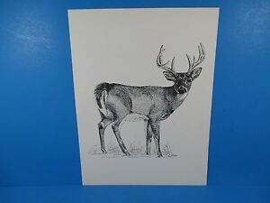 """Pen & Ink Lithograph Donald Hoffer Fauna Series 10"""" x 13"""" Wildlife Stag Buck"""