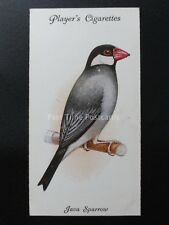 No.40 JAVA SPARROW - Aviary and Cage Birds by John Player 1933