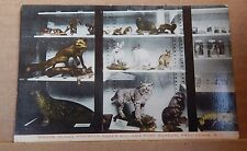 Postcard America Taxidermy Roger Williams Museum Providence R.I ,unposted