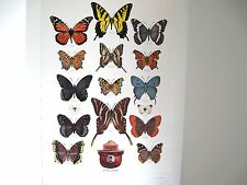 """U. S. Forest Service Poster-Butterflies-Pretty Please - 20x30""""  Colorful Beauty!"""