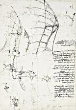 Bird's winged apparatus with partly rigid wings Leonardo da Vinci Poster Print