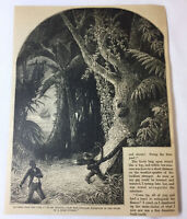 1877 magazine engraving - WOMAN ATTACKED BY PYTHON