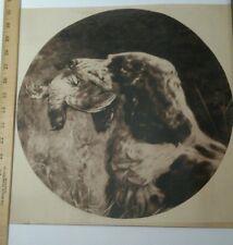 Springer Spaniel Birddog Print 1900