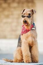 The Airedale Terrier Dog Journal : 150 Page Lined Notebook/diary by Dog.