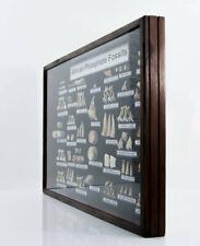 More details for very large otodus obliquus & selection of shark teeth frame 70 cm - 3.4kg