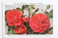 17031 anuncios ak 50 años rosas cultura Münch & Haufe Dresden Leuben 1936 heidezau