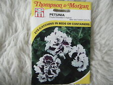 SEED T&M FLOWER PETUNIA PURPLE PIROUETTE F1 HYBRID SEEDS RRP £3.29