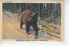 Hitch Hiker Bear Greetings from Cadillac MI Mich    S-417