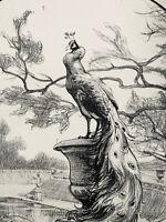Adolphe Gumery Gravure Lithographie Art Nouveau Étude De Paon Peacock Bird