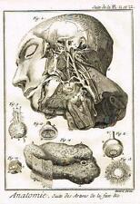 Diderot's Enclyclopedie - ANATOMIE, SUITE DES ARTERES DE LA FACE - c1750