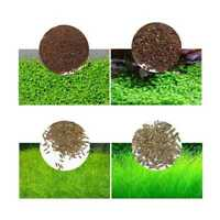 11x Aquarium Pflanzensamen Wasser Gras Vordergrund Aquarium Wohnkultur