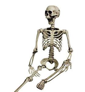 Skelett Halloween 96cm H Beweglich / Lehrmodell / Anatomie / Deko