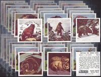 GRANOSE-FULL SET- TIPPYTAIL THE GRIZZLY BEAR (M48 CARDS) - EXC+++