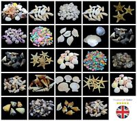 Natural Shells - Seashells Beach Shells Wedding Display Craft Aquarium Sea Decor